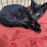 黒猫はフレンドリーで賢い‼️マルは性格も○ サムネイル2