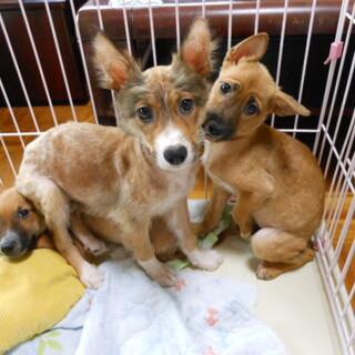 まだまだ臆病な子犬たちを家族に迎えてください。