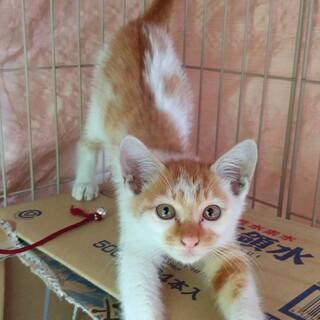 ボンネットに一泊子猫保護