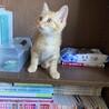 子猫 1ー2ヶ月 保護ねこ 里親募集!
