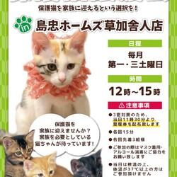 保護猫譲渡会@島忠ホームズ草加舎人店 サムネイル1