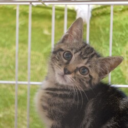 【毎日開催】保護猫の譲渡会 子猫&大人猫 サムネイル3