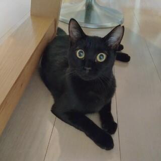 まん丸お目々の黒猫