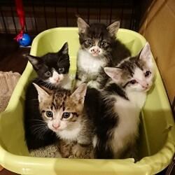 4匹の子猫を保護