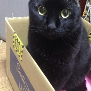 ハの字眉毛の黒猫さん