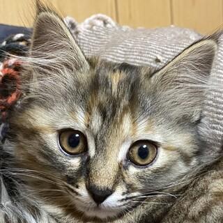人見知りだけど、凛としたカワイイ猫です。