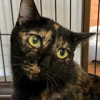 【多頭崩壊レスキュー】額の三日月が可愛いサビ猫さん