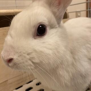 白ウサギをもらって下さい