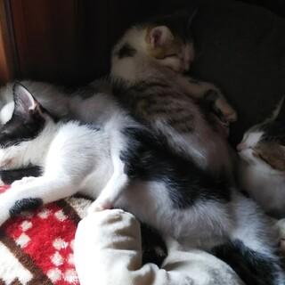 近所の屋根裏で生まれた子猫4匹に素敵な出会いを!