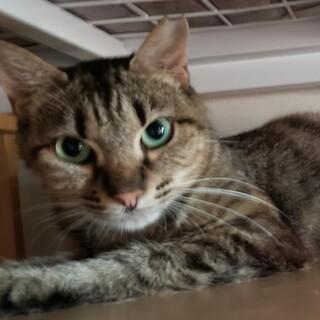 猫と静かに暮らしたい方向けの賢い猫です