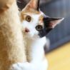三姉妹のかわいいリーダー♡懐っこい三毛猫ランちゃん サムネイル2
