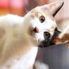 三姉妹のかわいいリーダー♡懐っこい三毛猫ランちゃん サムネイル7