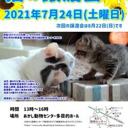 明石【譲渡会】猫まみれwithあかしっぽ 第2回 サムネイル1