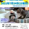 明石【譲渡会】猫まみれwithあかしっぽ 第2回