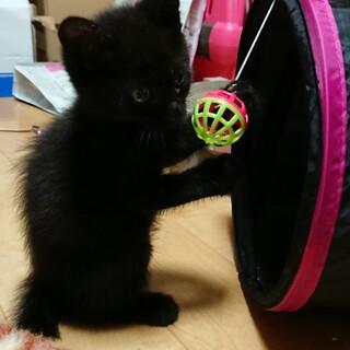 仔猫しっぽな君里親さん募集