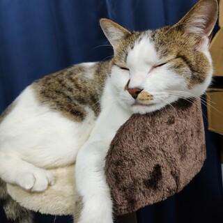 元々捨てられていた子猫を保護 現在3歳