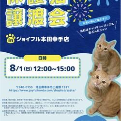 保護猫❤️譲渡会 in ジョイフル本田幸手店