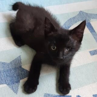 黒、約2ヶ月の女の子です