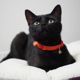 人懐こい黒猫の家族になってくれる人を探しています。