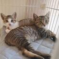 淡路島の子猫たちに会いに来てくださいませんか?