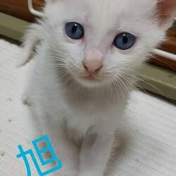 三重県津市7月25日(日)ほんわか猫な日々子猫の譲渡会