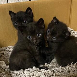 元気いっぱいの黒猫3兄妹