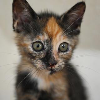 超美形のサビ猫ちゃん