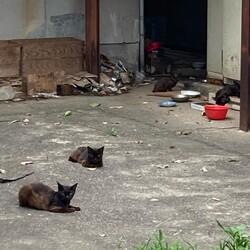 野良猫の保護サムネイル