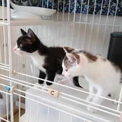 2匹の子猫が里子に!