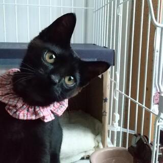 黒猫おっとりお利口男子生後3か月
