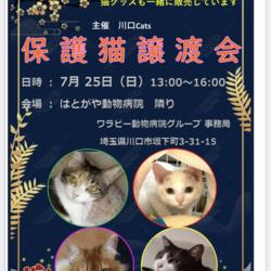 【川口Cats 主催】ほごねこ譲渡会