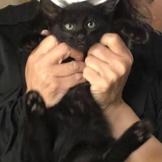 イケメン黒猫★人懐っこい男の子♪