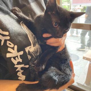 ツキノワグマみたいでかわいい!黒子猫フワくん!