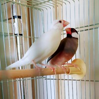 ビビ&モグ