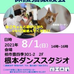 8/1 柏市根本ダンススタジオ猫カフェ風保護猫譲渡会