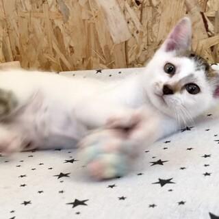 奇跡の猫!幸せを呼ぶ猫♡アラレちゃん♡