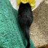 推定約2ヶ月 慣れ慣れ黒猫 黒みつ君 サムネイル5