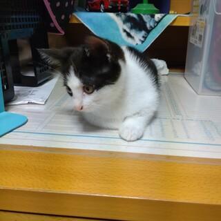 小猫 女のコ 白黒