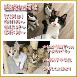 譲渡相談会〜福ねこハウス〜