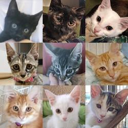 子猫26匹のオリンピック/愛知県みよし市 サムネイル2