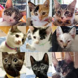 子猫26匹のオリンピック/愛知県みよし市 サムネイル3