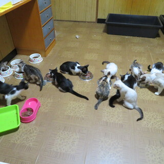 3匹のお母さんが産んだたくさんの仔猫たち