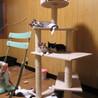 3匹のお母さんが産んだたくさんの仔猫たち サムネイル2
