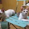 3匹のお母さんが産んだたくさんの仔猫たち サムネイル6