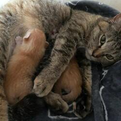 子猫お見合い会開催いたします❣️