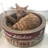ぼく、お喋りする猫です♬ サムネイル3