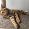 ぼく、お喋りする猫です♬ サムネイル4