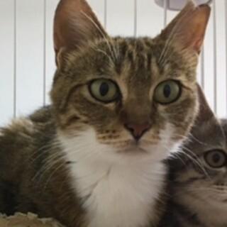 お母さん猫『おこげちゃん』避妊済み