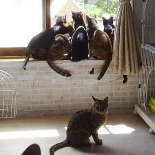 成猫との生活で毎日を楽しく賑やかに☆