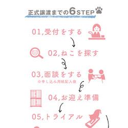子ねこまつり譲渡会!!『ねこフェス inあまがさき』 サムネイル2